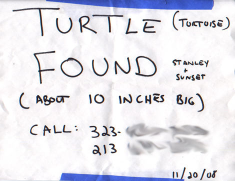 foundturtle