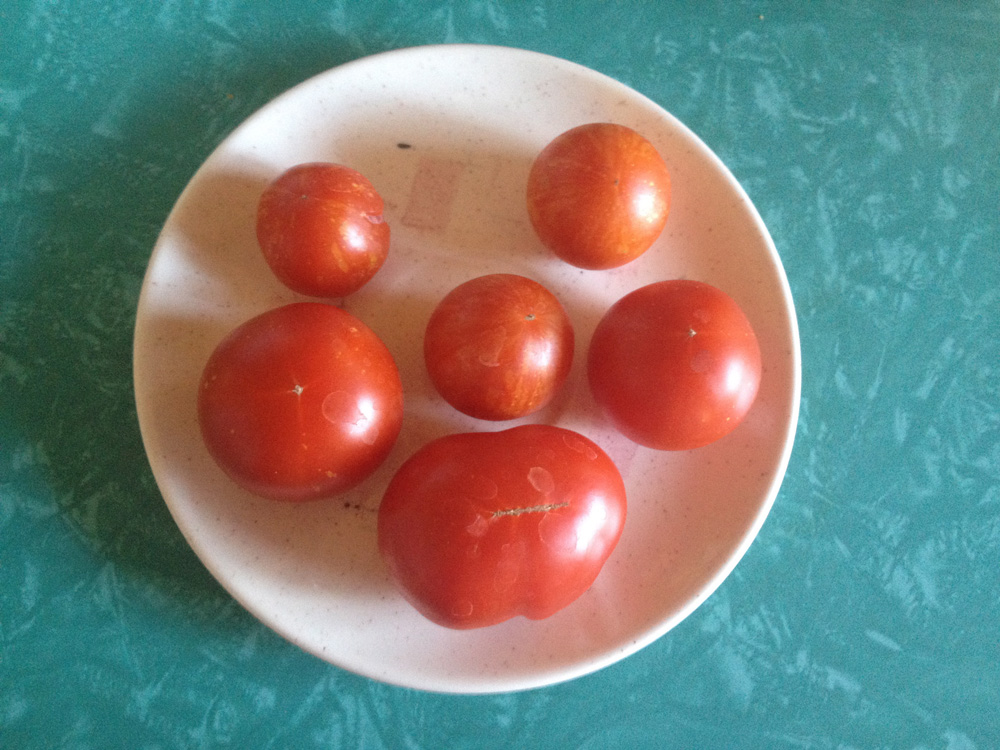 tomato guys Tomatoes back to top pickled tomatoes  marinated sliced green tomatoes  size price quantity  sun-dried tomato stuffed olives size price quantity.