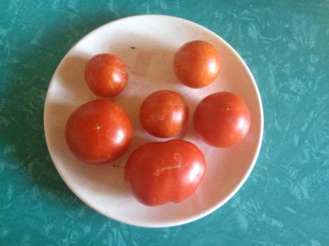 tomatoguy