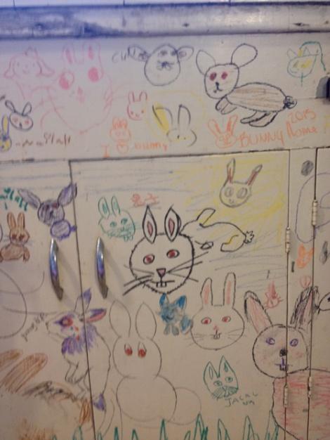 bunnydrawings